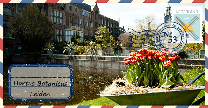 Botanische Tuin Leiden : Hortus botanicus leiden